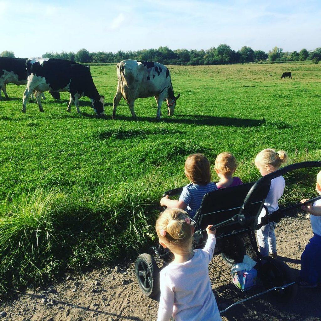 Små børn ser på køer på mark