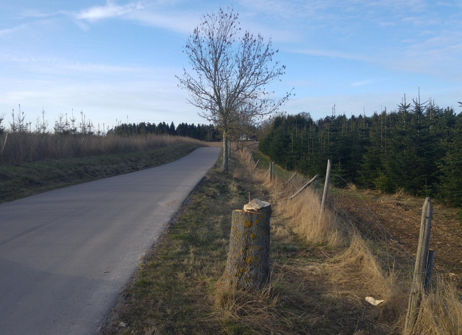 stub efter ødelagt træ